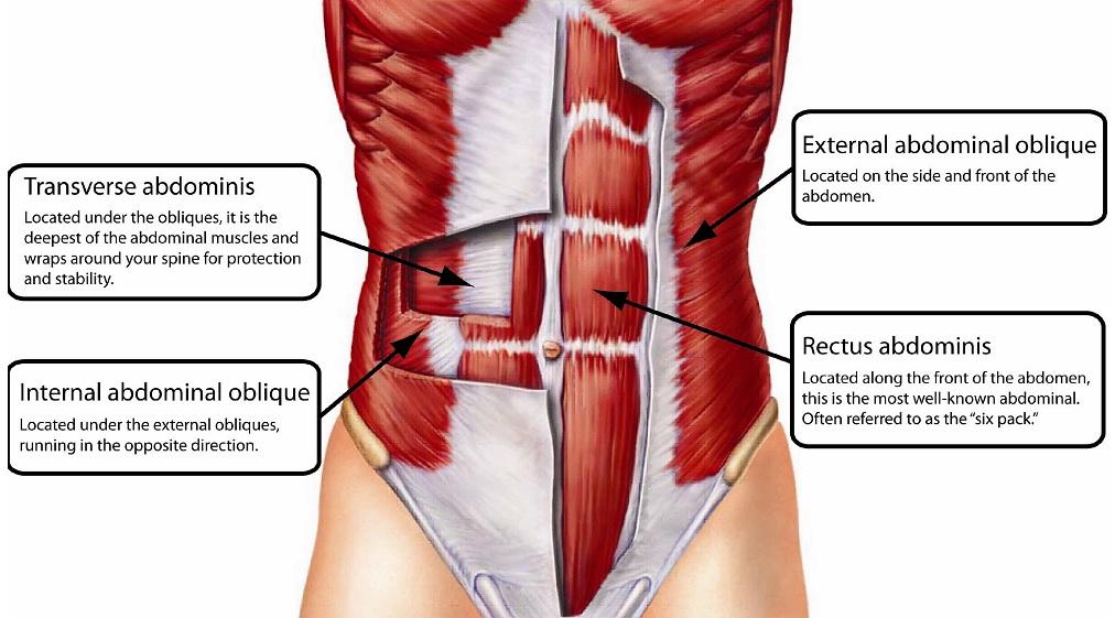 Como hacer la plancha abdominal