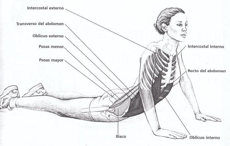 Engrosar la voz estirando el abdomen y el cuello